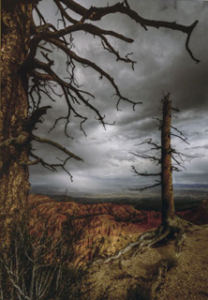 2011weathered trees_pavlow