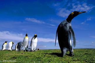 IreneHinkeSacilotto-penguin
