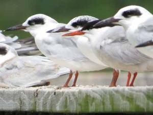 DG birds