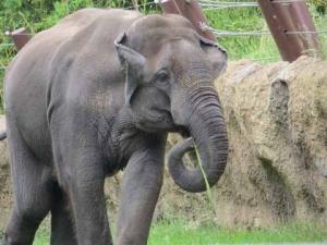DG elephant