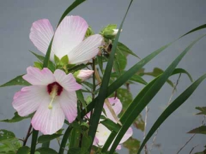 DG flowers