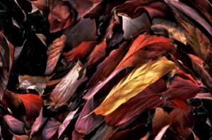 H Lovitz leaves