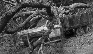 J Hickey_tree-on-truck