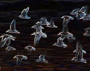 jbc- glowing birds
