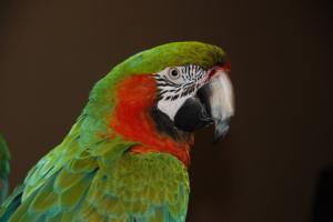 many_der_bird