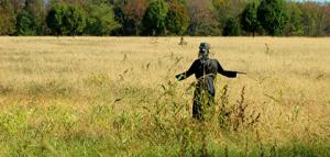 stillness-tfn-scarecrow
