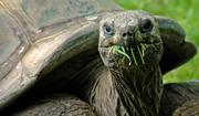 JanG 2 tortoise