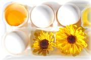 JanG a13 eggs