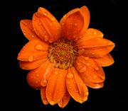 JanG a20 flower