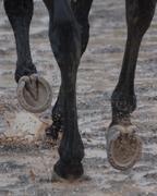 MBB hooves
