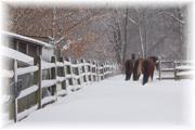 MBB snowy pony