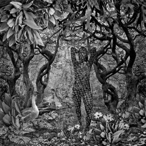 MLR 09_serpentine forest
