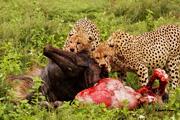 SD life on the serengeti