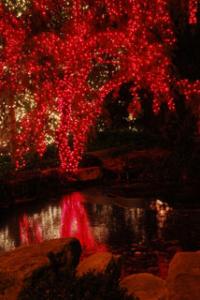 jmm tree reflections resized 320pxh