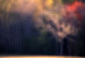 Cades Cove dreamscape