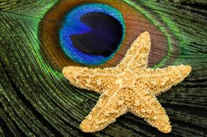 Starfish-0376