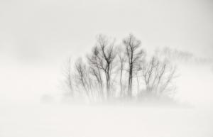 W_WB01-fog