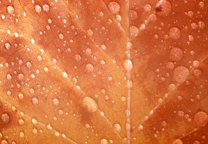 T201010MJH-Rain on leaf