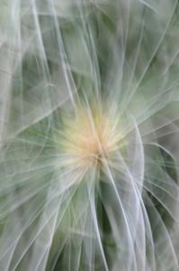 Fanic Floral Impression