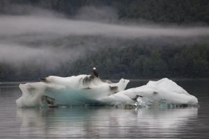Iceberg Eagle_Joyce Goldberg DiM award