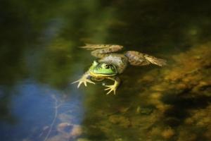 K DiTanna Frog IMG_2121