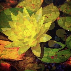 waterlily_Paxson_LauraBrandt